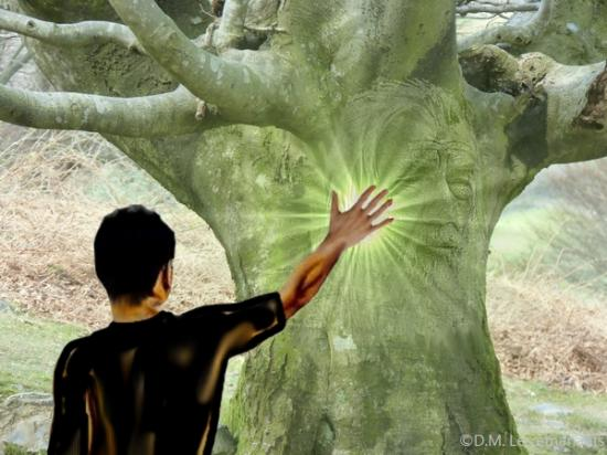 Esprit arbres