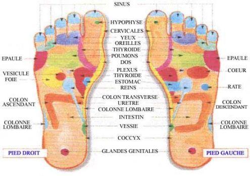 Reflexologie pieds